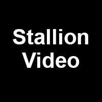 Stallion Video