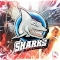 sharksdesigns