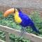 toucansams