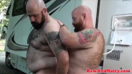 Camping chubby bears suck and breed outdoor