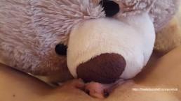 Eat my Squirt Naught Teddy Bear
