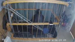 The Cage Cam May 9 2018 1632 Motion sensor triggered recordings