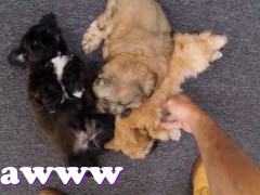 XXX PAWN - Things Get Weird When Valerie White Brings Puppies Into Our Shop