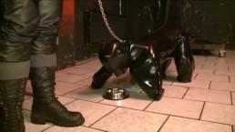 BDSM fetish extreme doggy leather slave