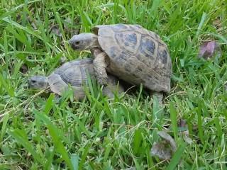 Turtle stud fucks unexpected turtle hoe.