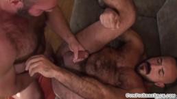 Hairy wolf cums on bears hard cock