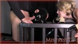 Gimp for Mistress T