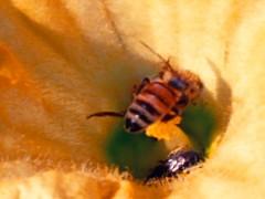 INTERNATIONAL BEE-KAKE PARTY