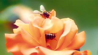 Married couple's first bee some