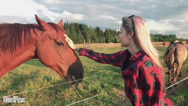 Pornhub Horse