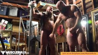 TIED UP MUSCLEBULL IN LEATHER GETS HIS COCK AND BALLS SLAPPED AND PLAYED