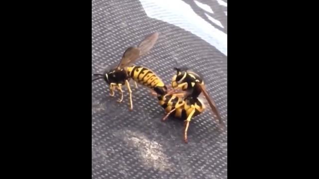 Just Bee Gentle