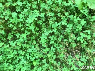 I went for a walk in the woods, and got lucky twice!