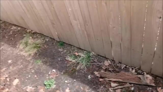 Bunny in the Backyard 16