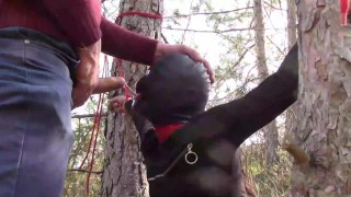 Tied to a tree on a sexy outfit, masked and outdoor deepthroat with no mercy