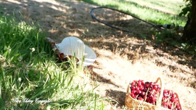 Tara Cherry cueille des cerises et se fait attraper par le patron et son employé 33